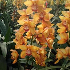 orchids-samos-02
