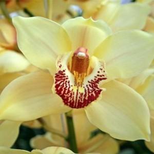 orchids-samos-04